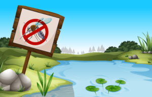 mosquitos en piscinas naturales